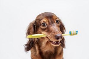 Zahnpflege Hund